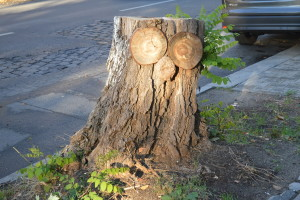 baum-stumpf